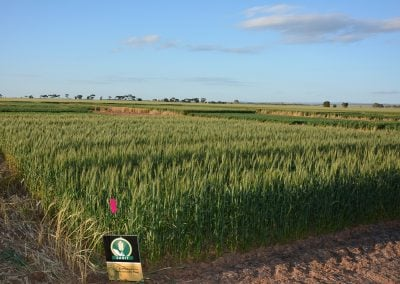 Efficiency of fertiliser N products on calcareous and sandy soil types